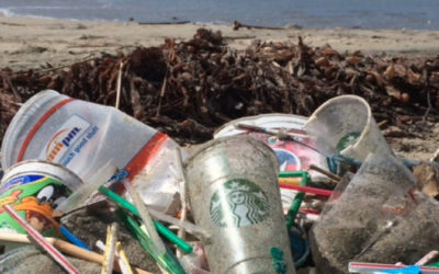 Plastic Straw Alternatives: Our Top 5 Materials